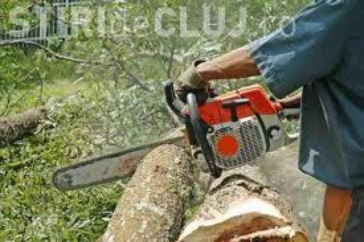 Clujean prins de polițiști în timp ce tăia ilegal arbori din pădure