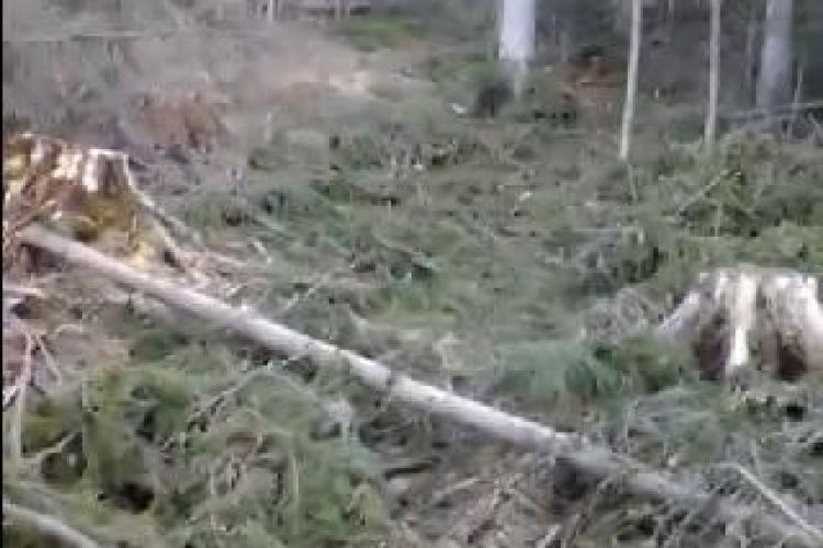 """La Beliș se taie pădurile """"fără număr""""! Un localnic a filmat dezastrul, sătul de MAFIA PĂDURARILOR - VIDEO"""