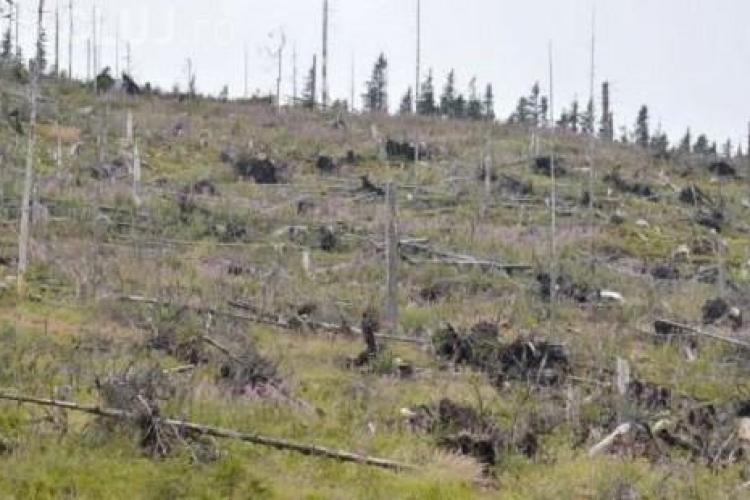Pădurile se taie în LINIȘTE la Cluj! Polițiștii și cei de la ITRSV Cluj nu sperie pe nimeni