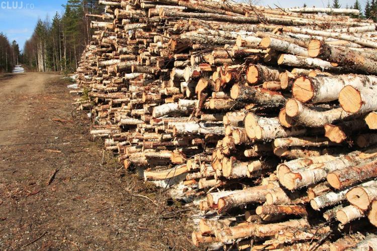 Defrișările ilegale sunt în toi la Cluj. Un bărbat a fost prins în timp ce vindea lemne furate