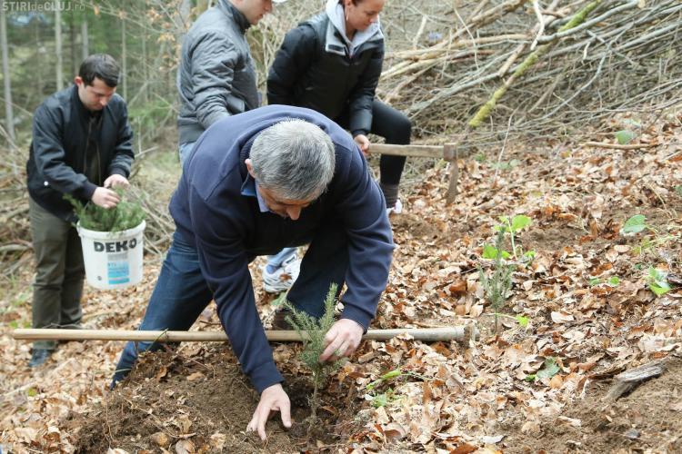 Uioreanu și liberalii din Huedin au împădurit 3 hectare în Călațele - FOTO