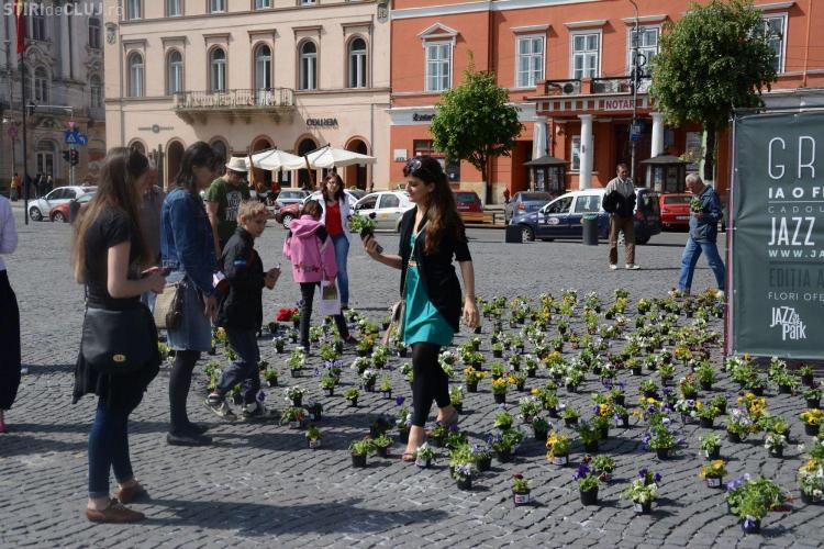 O mie de ghivece cu panseluțe, oferite gratuit clujenilor în Piața Unirii - FOTO