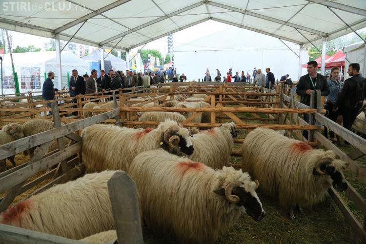 Agraria 2014. La Cluj au venit chinezii după oile românești, iar trendul exporturilor e pozitiv  - FOTO