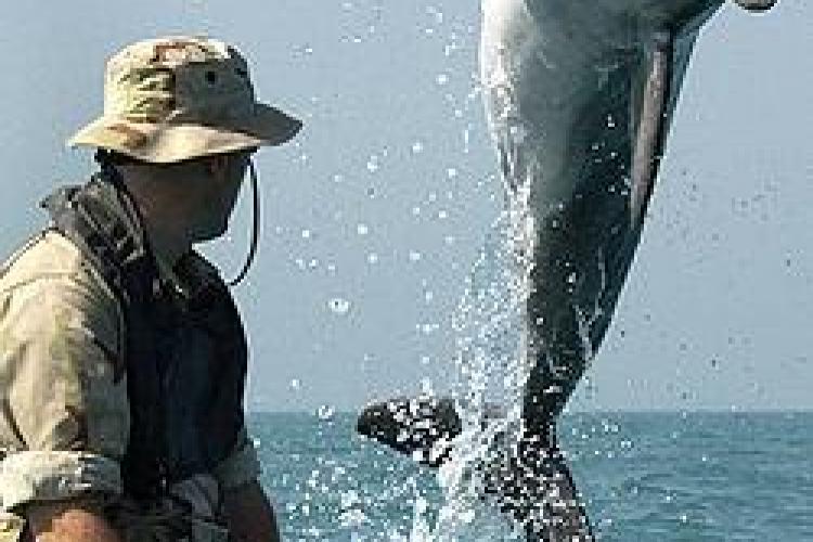 NATO aduce delfini dresați pentru misiuni militare în Marea Neagră