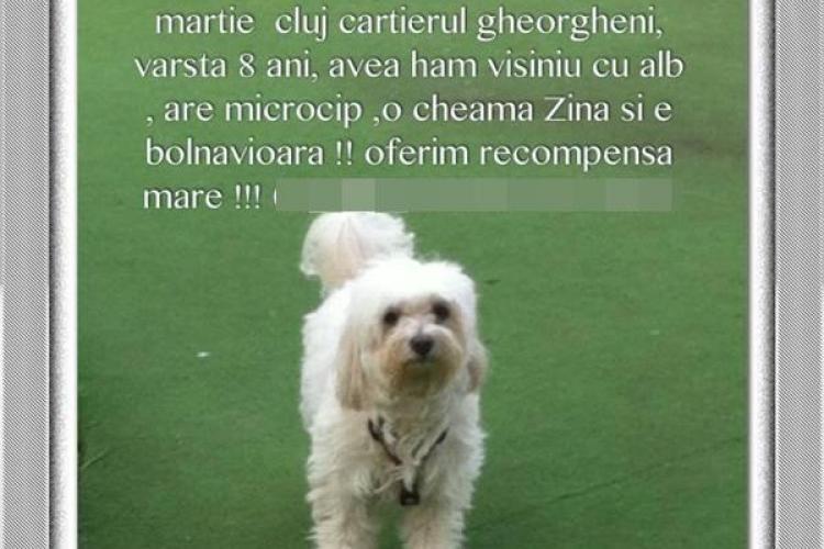 A furat un câine din Gheorgheni și l-a returnat cu taxiul. Ce i-a scris proprietarei?