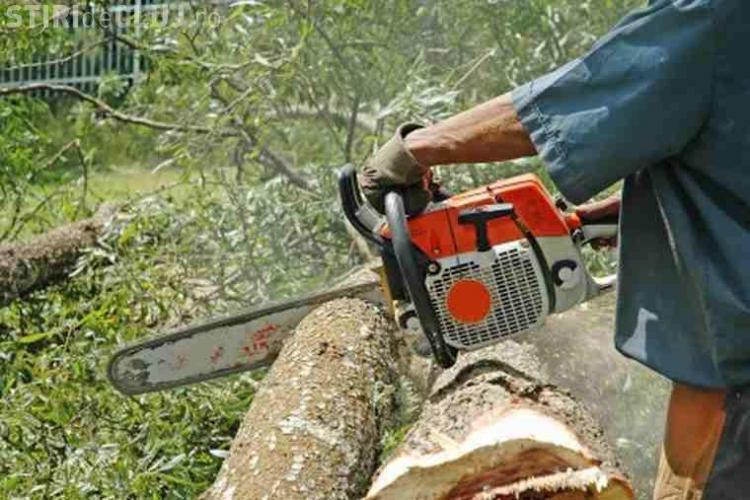 Clujeni prinși la furat de lemne. Foloseau două tractoare pentru a transporta arborii