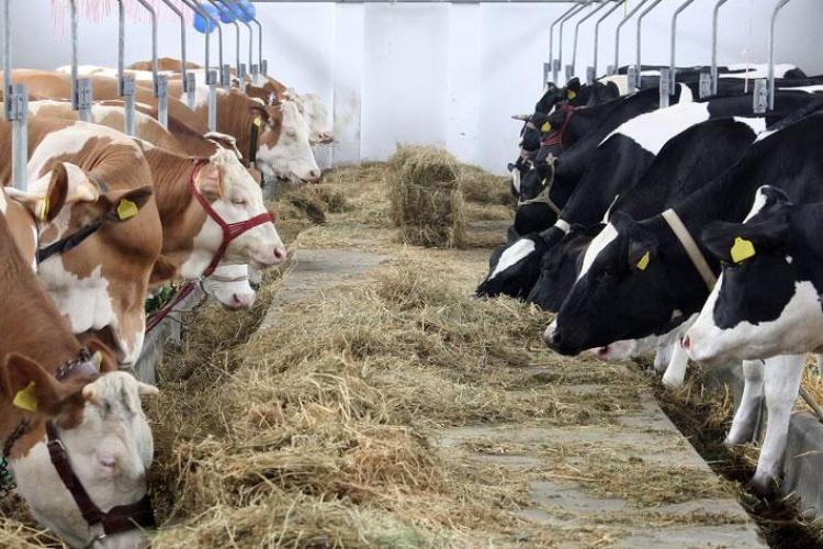 """Caz atipic al """"bolii vacii nebune"""" depistat la Cluj, în Chinteni. Rușii au blocat importurile de carne din România"""