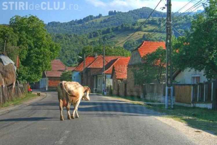 Accident cu o victimă la Căianu, după ce unui clujean i-a ieșit în cale o vacă