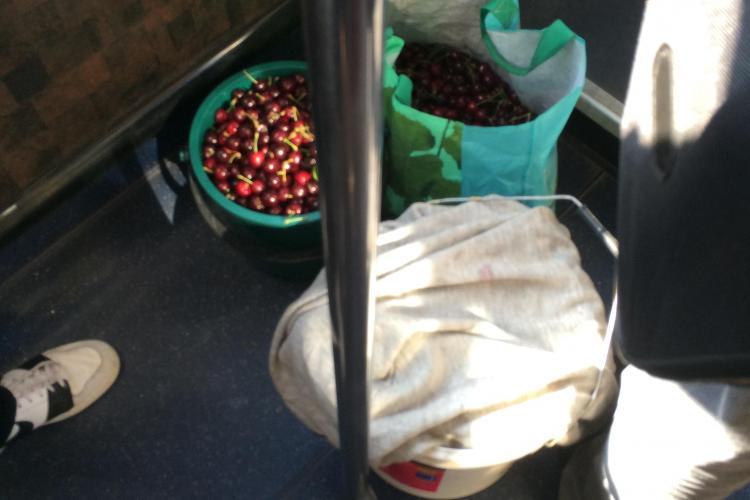 Romii din Iris fură toate cireșele din livada Steluța! Un clujean i-a fotografiat cu gălețile în autobuz - FOTO