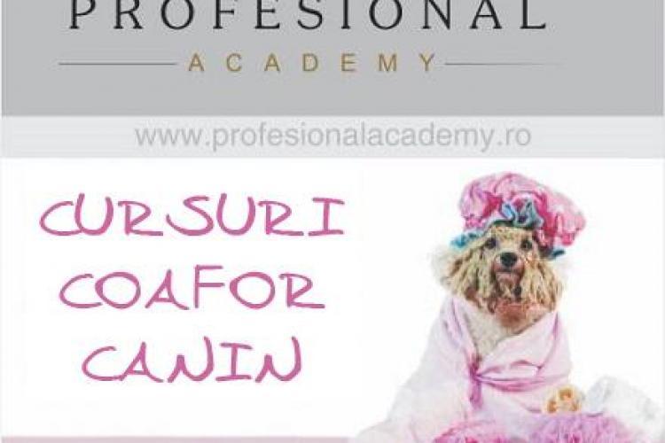 Cursuri profesionale de toaletaj canin la Cluj, în premieră în România. Vezi unde te poți înscrie (P)