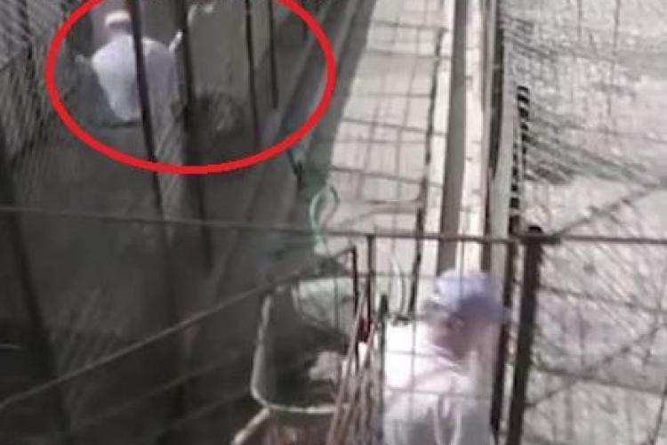 Câinii bătuți cu lopata la Adăpostul din Dej! Angajații beau și fură mâncarea animalelor - VIDEO ȘOCANT