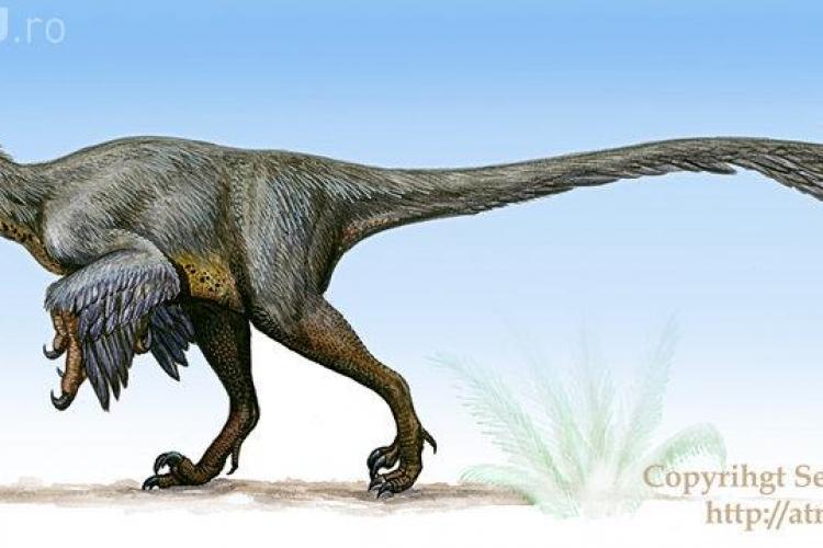 Dinozaurul descoperit de un clujean, vedeta Geoparcului din Țara Hațegului