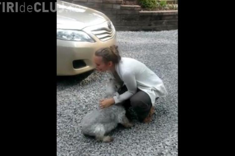 CLIPUL ZILEI Un cățel a leșinat de bucurie când și-a revăzut stăpâna VIDEO