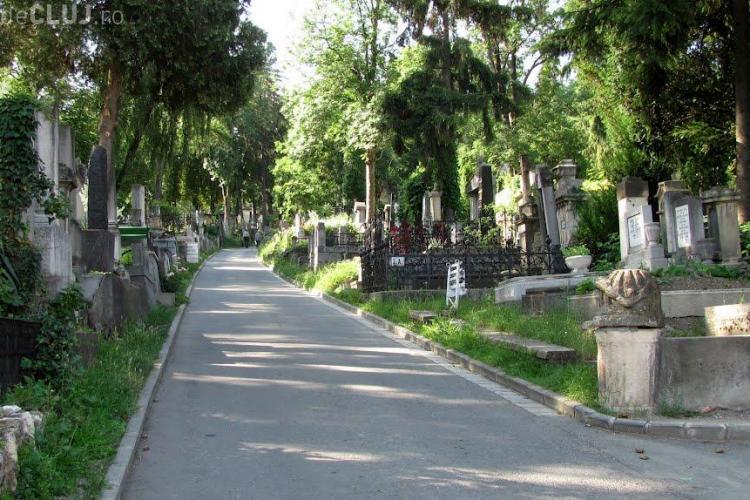 """Peste 100 de brazi uscați din Cimitirul Central, ignorați de autorități de peste un an: """"Nu ne zice nimeni nimic"""""""