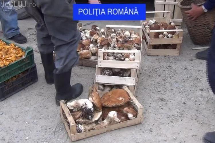 O tonă de ciuperci și fructe de pădure, confiscate de polițiștii clujeni de la oamenii din Măguri-Răcătău, Mărişel şi Beliş