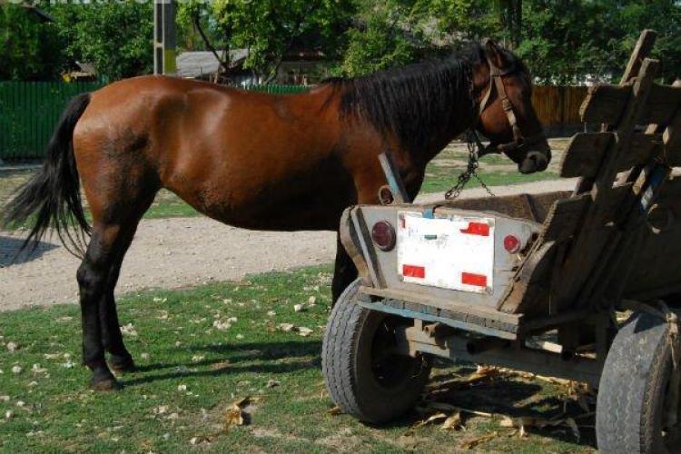 Bărbat reținut de polițiștii clujeni după ce a furat un cal și o căruță