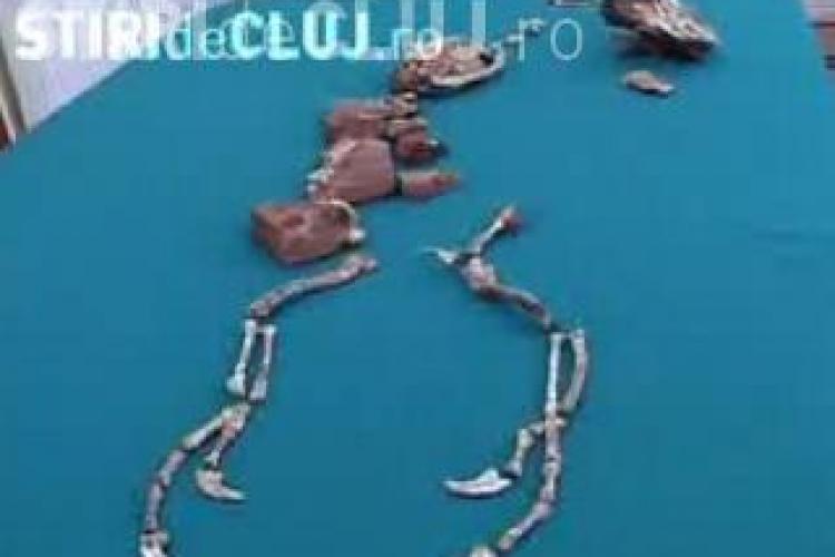 Scheletul Balaurului Bondoc, descoperit de clujeanul Matei Vremir, costa peste 100.000 de euro