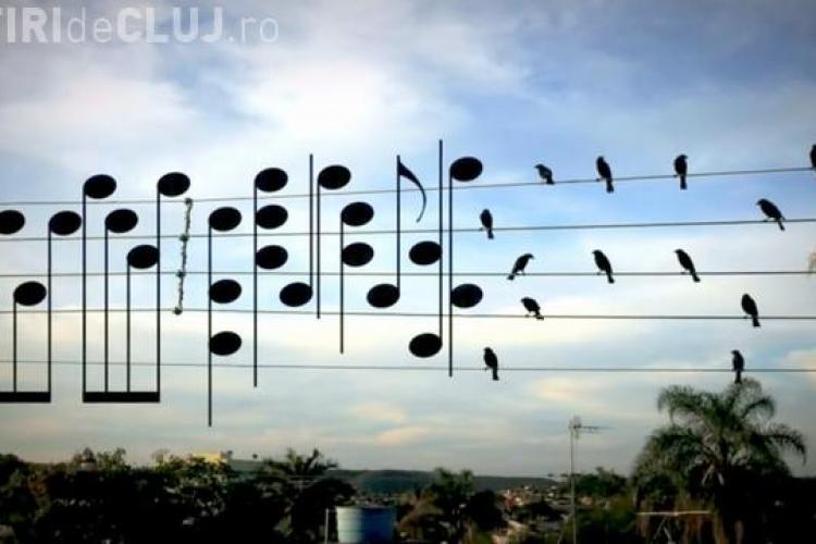 Un muzician a înlocuit pozițiile unor păsări cu note muzicale. Rezultatul este unul spectaculos VIDEO