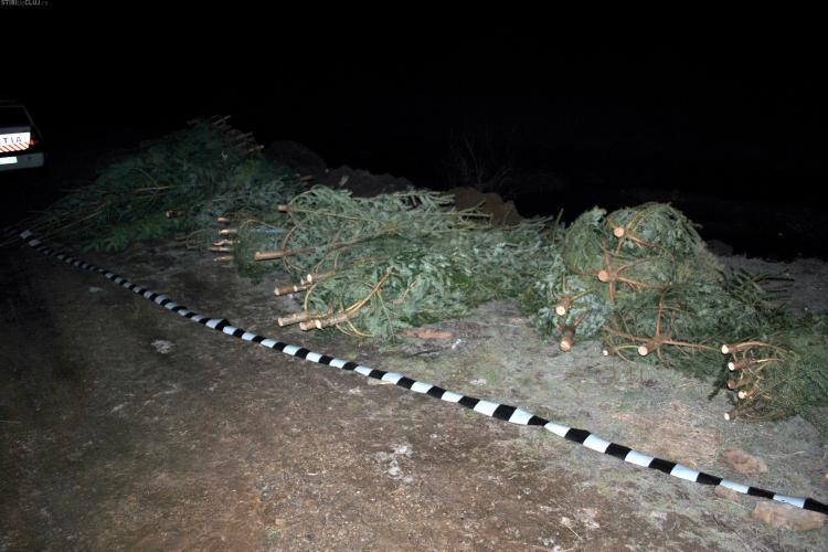 Peste două tone de cetină și 200 de brazi tăiați ilegal, confiscați de polițiști la Cluj
