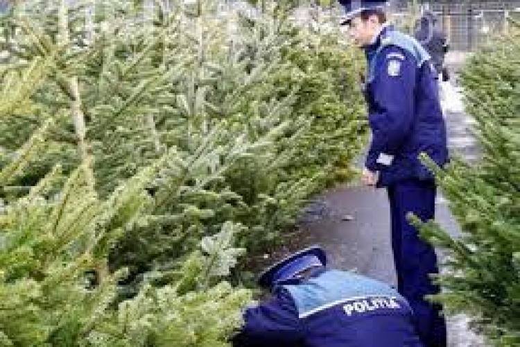Pomi de Crăciun în valoare de 7.000 de lei, confiscați la Cluj