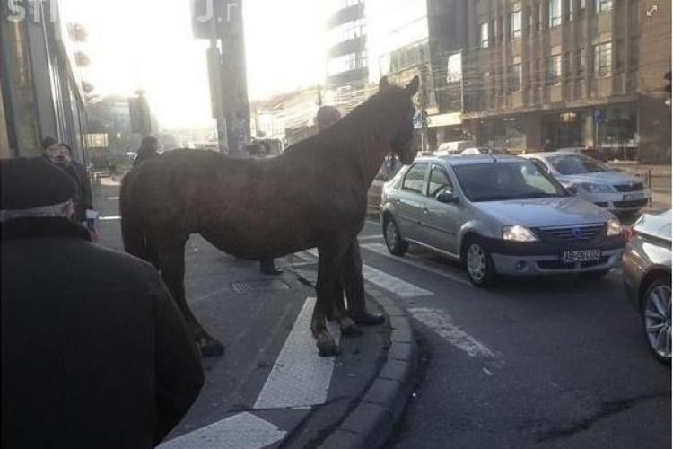Ferma de animale din centrul Clujului! După ce au plimbat porcul pe Barițiu, acum plimbă calul - FOTO