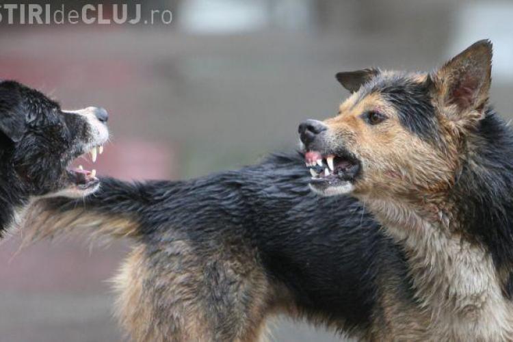 Clujean mușcat de câini în centrul orașului! Pe cine ACUZĂ acum