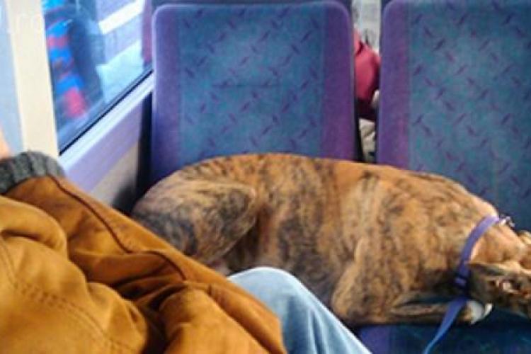 Propunere la Cluj: Câinii cu stăpân să circule cu autobuzul