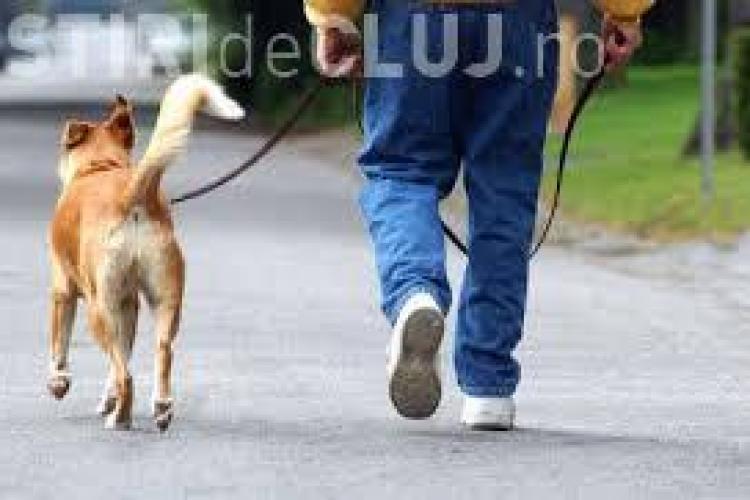 Mai mulți clujeni se plâng de stăpânii de câini care nu adună excrementele animalelor: Să presteze muncă în folosul comunității