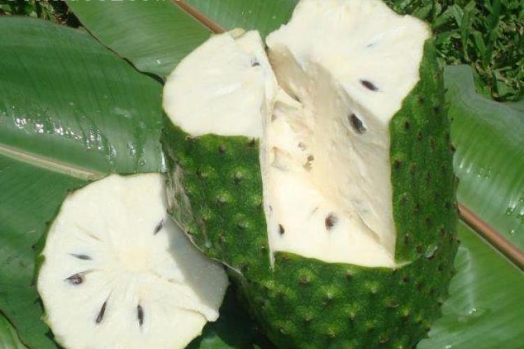 SOURSOP: Fructul MAGIC. E mai puternic de 10.000 de ori decat chimioterapia