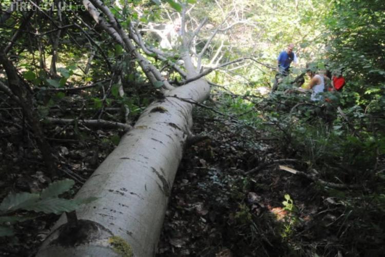 """Tragedie la Cluj! """"Curăța"""" pădurea și a căzut un fag peste el. Un tânăr de 18 ani a murit strivit"""