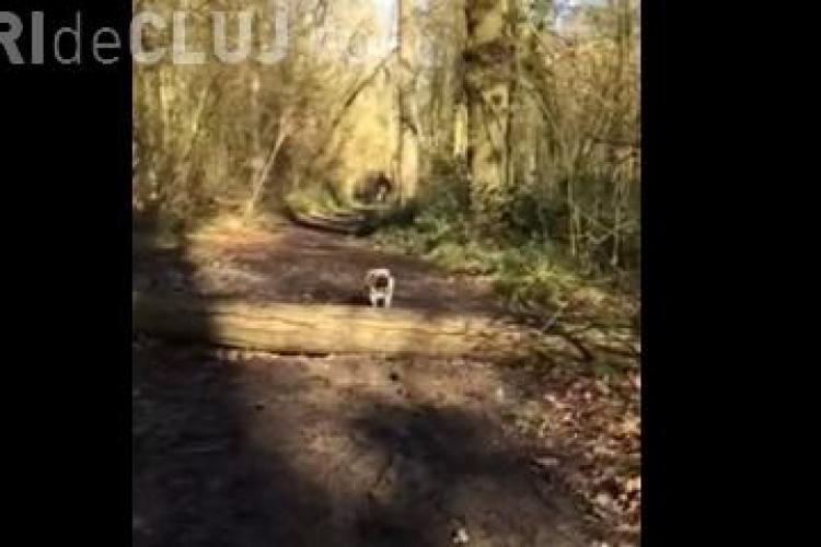 Momentul amuzant în care un cățelul încearcă să sară peste un buștean și eșuează complet - FUNNY VIDEOS