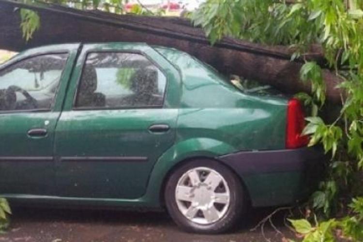 Copaci căzuți peste două mașini lângă Hotelul Napoca