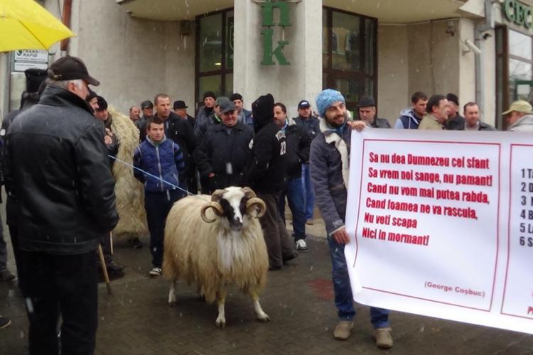 Fermierii clujeni protestează în fața Prefecturii. Vedeta manifestării a fost berbecul Daniel FOTO VIDEO