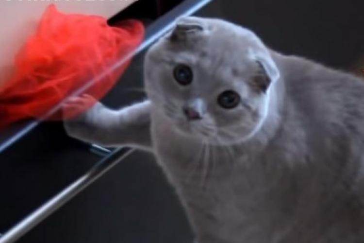 Pisicile fac tot felul de boroboațe prin casă. Când sunt prinse fac aceste fețe drăgălașe - VIDEO