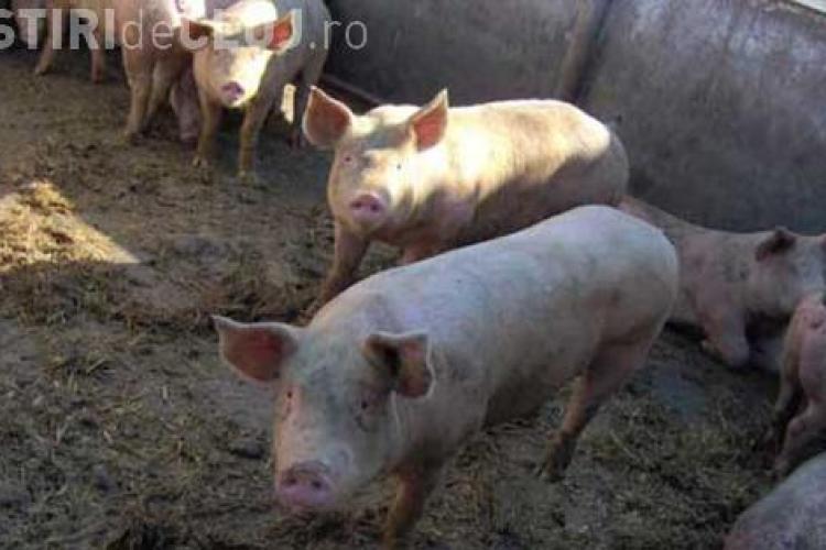 Moarte TERIBILĂ pentru un clujean. L-au mâncat porcii