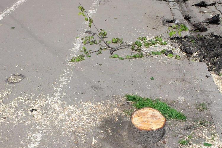 Ce spune Emil Boc despre copacii tăiați pe strada Horea: Vor trebui tăiați și alții