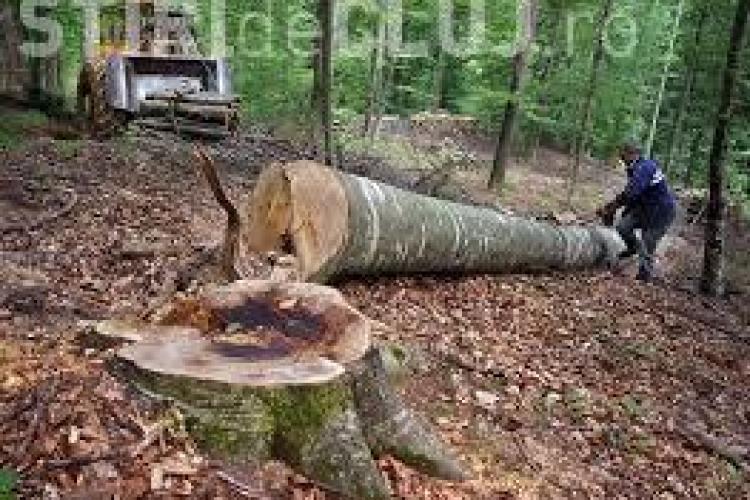 Razie în pădurile din Someșul Rece. Se caută lemnul furat în ultimele zile