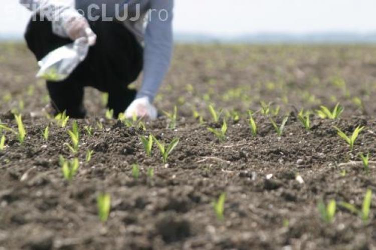 Cum înșelau doi fermieri clujeni UE pentru a lua subvenții pentru mai bine de 1.300 animale